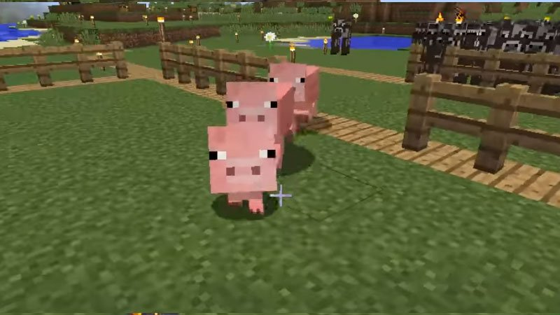 What Do Pigs Eat In Minecraft?