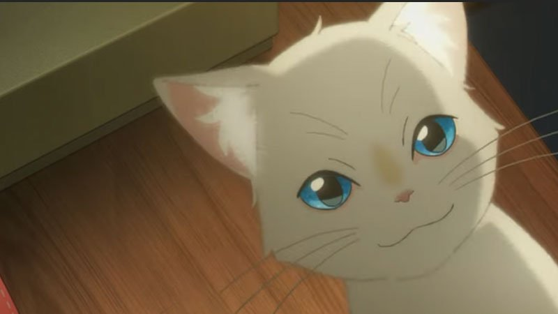 70 Best Anime Cats of All Time: The Ultimate Feline Movies & Shows List
