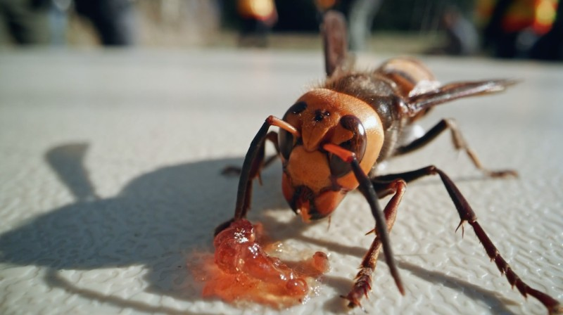 'Attack of the Murder Hornets' Review